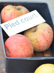 Pied court